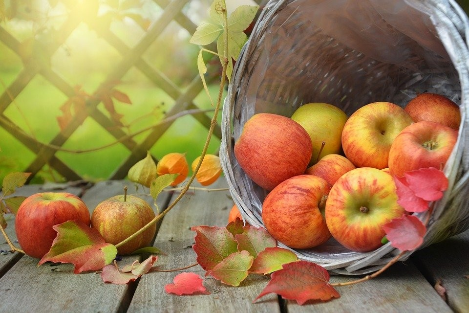 Äpplen i en korg på en altan med soljlus i bakgrunden
